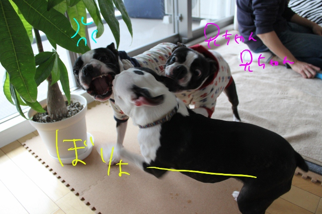 ぼりょぽん 037_edited-1 (640x427)