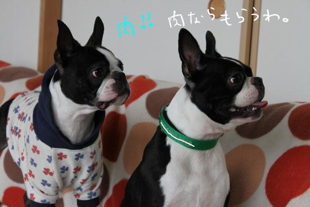 ぼりょぽん 096_edited-1 (640x427)