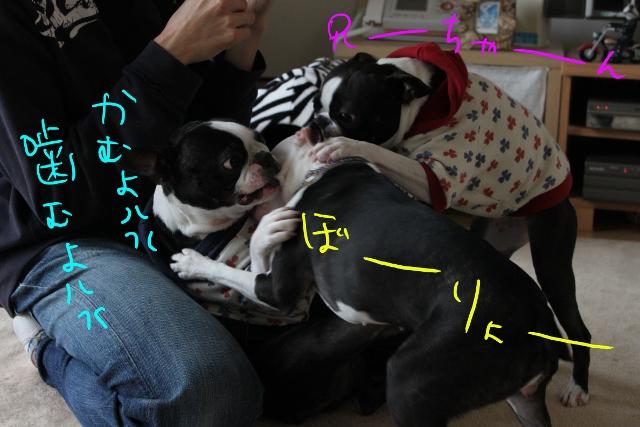 ぼりょぽん 126_edited-1 (640x427)