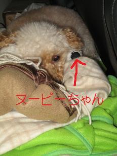 2010_0304_135100-IMG_9720.jpg
