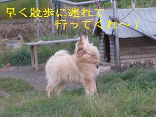 2010_1018_160843-IMG_2137.jpg