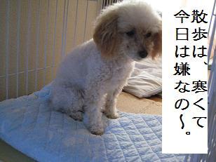 2010_1204_145144-IMG_2726.jpg