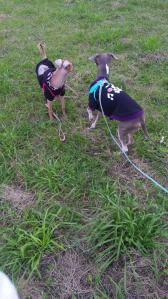 BOON&CHA-B散歩風景