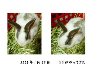 mimi_001.jpg