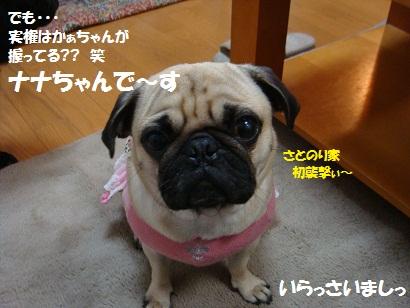 DSC00143_20110510030413.jpg