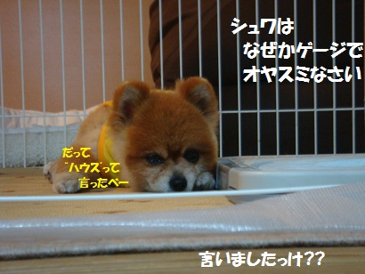 DSC00224_20110510040126.jpg