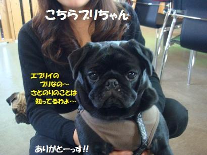 DSC00339_20110512180226.jpg