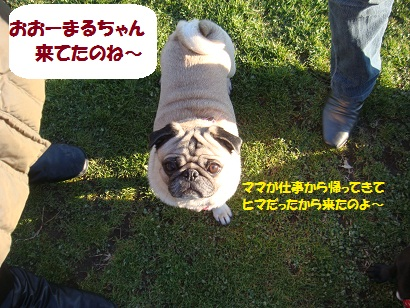 DSC00379_20110512184407.jpg