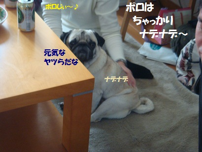 DSC00475_20110521032052.jpg
