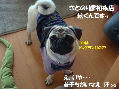 DSC00483_20110520204646.jpg