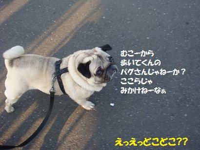 DSC04998.jpg