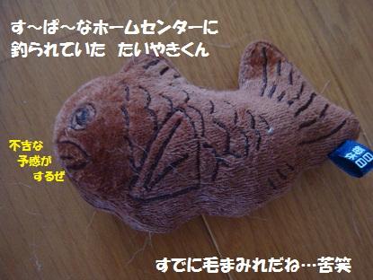 DSC05532_20110508171614.jpg