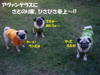 DSC05811_20110429234432.jpg