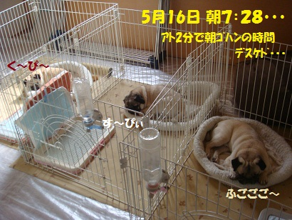 DSC06428_20110518024736.jpg