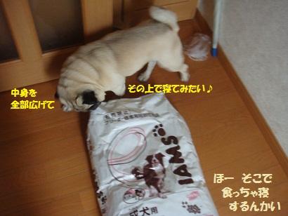 DSC06444_20110518033750.jpg