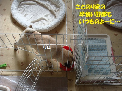DSC06447_20110518024736.jpg