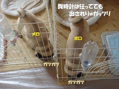 DSC06448_20110518024736.jpg