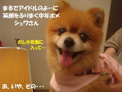 DSC06529_20110522015456.jpg
