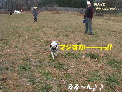 DSC09346.jpg