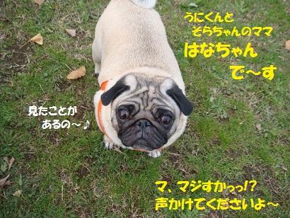 DSC09492.jpg