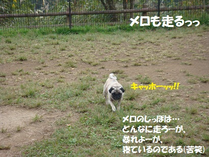PMBS3833.jpg
