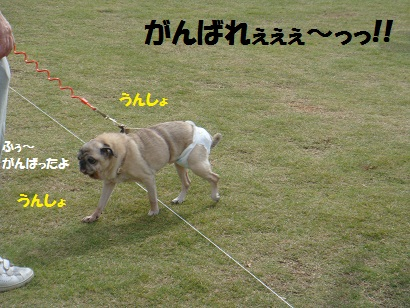 PMBS4051.jpg