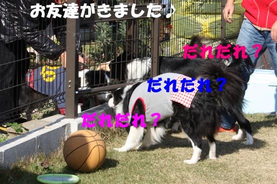 20091121_4.jpg