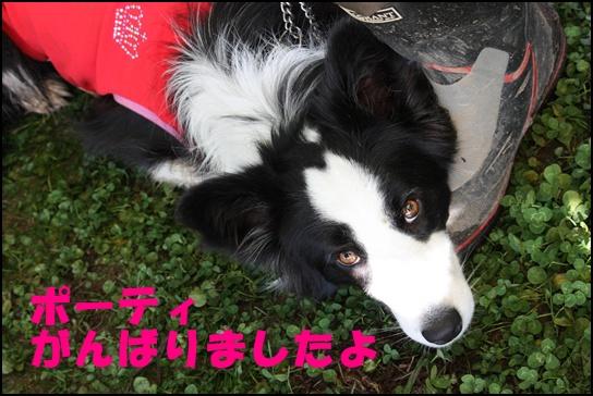 Blog新舞子4