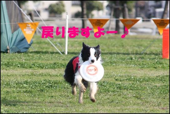 Blog新舞子8