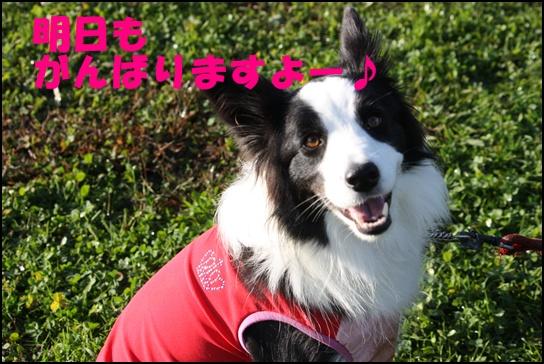 Blog新舞子9
