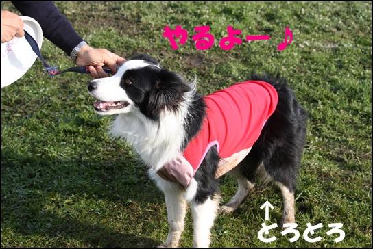 Blog新舞子6