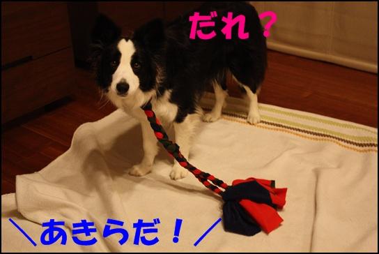 りんれく紐6