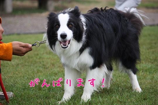 JFAshigaき