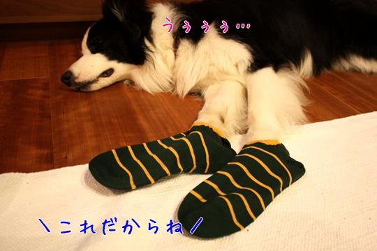 2010711靴下4