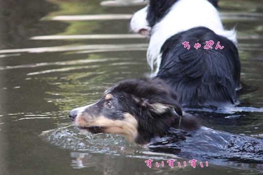 20100920水8