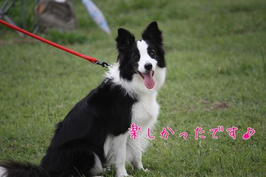 2010231ほ