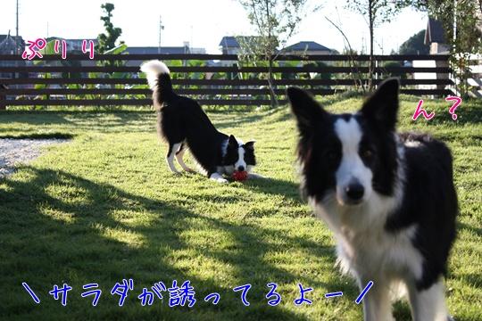 20101017qき