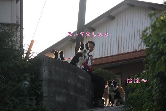 2010116た