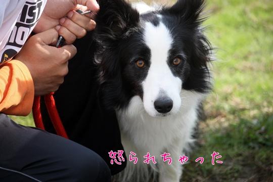 2010117き