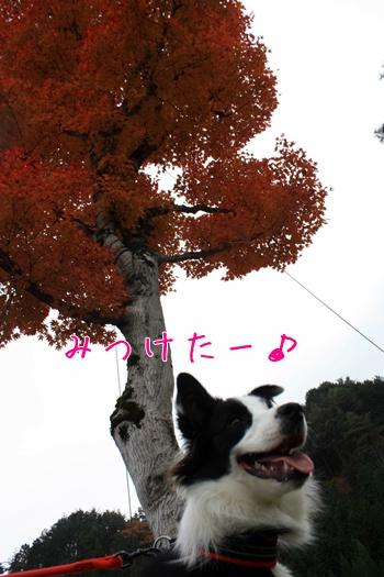 201011134.jpg