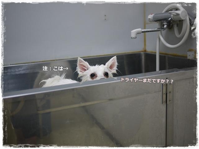 56_20110714202717.jpg