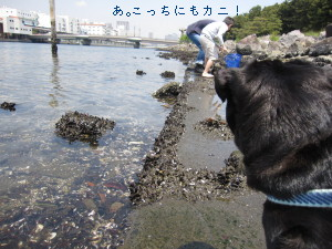 IMG_20100505__03.jpg