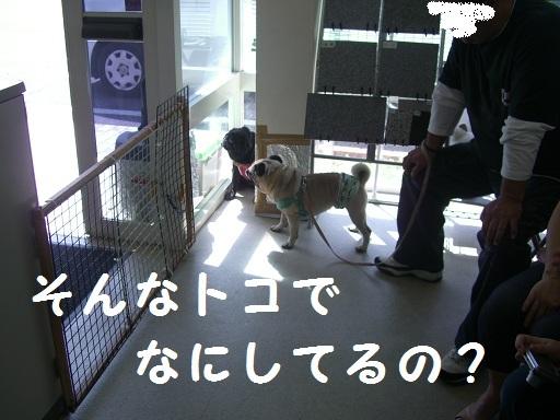 CIMG5386_20111020182240.jpg