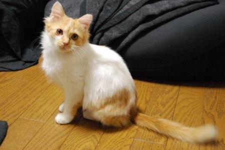 神奈川厚木猫・聖子ちゃん1