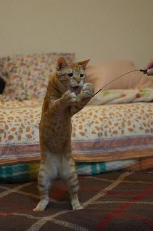 猫日記1474
