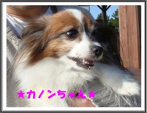 DSC07437.jpg