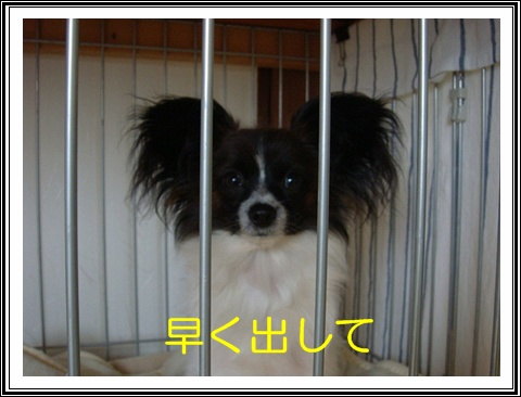DSC07968.jpg