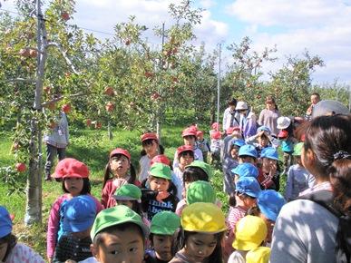 りんごの収穫と畑遊び