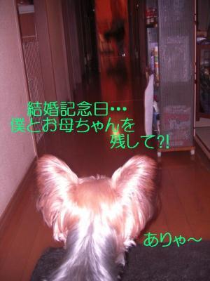 CIMG3739.jpg