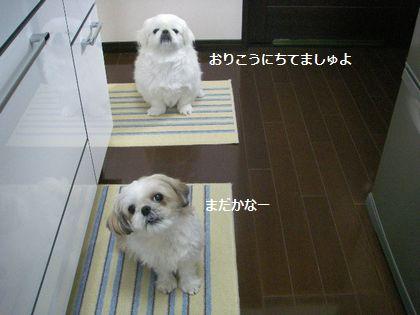 IMGP0981_0.jpg